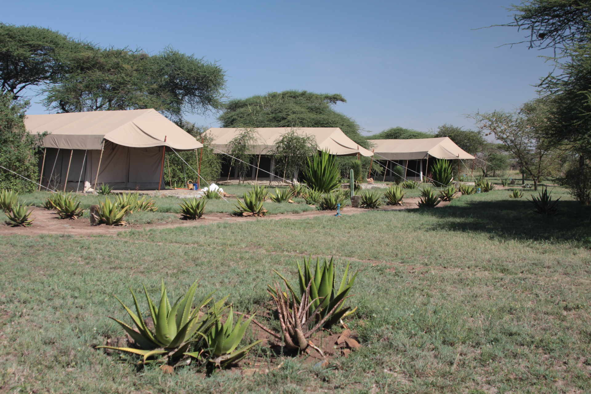 tented camp-serengeti