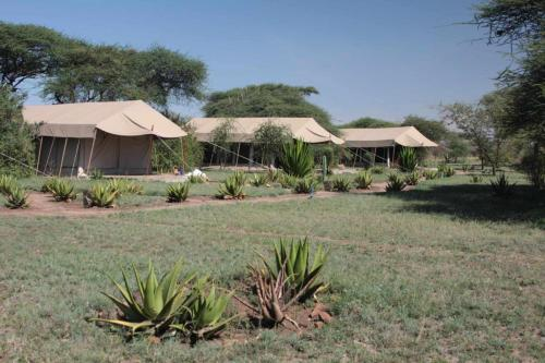 home-slide-3-tented-camp-serengeti