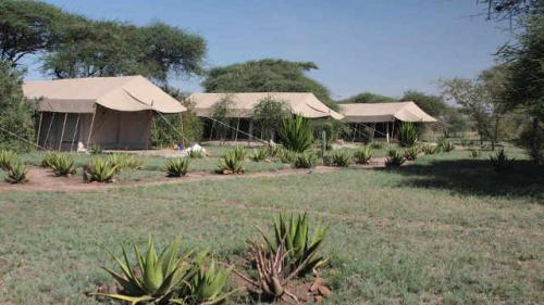 luxury-tented-camp-serengeti