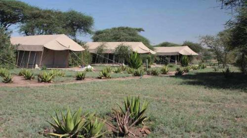 the-tents-1-luxury-tented-camp-serengeti
